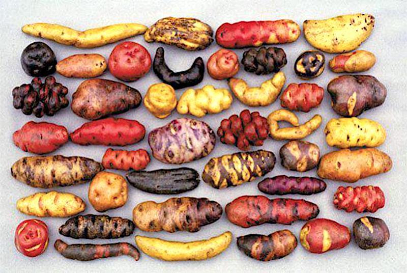 Historia de la gastronomía peruana